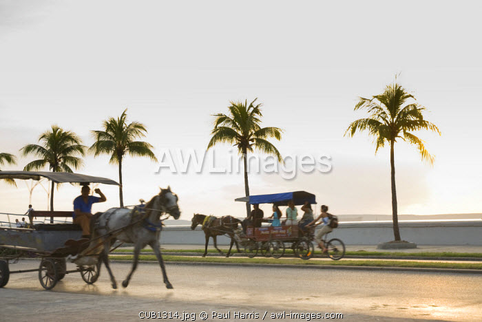 Cuba, Cienfuegos. Horse drawn taxis the Malecon, the road from central Cienfuegos to Punta Gorda