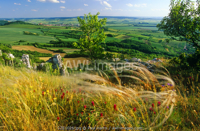Czech Republic. View from the Palava Hills, Mikulov