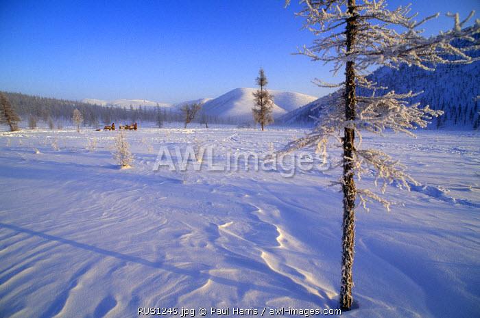 Russia, Kamchakta. Reindeer and herders crossing the winter tundra, Ayanka, Kamchatka, Russian Far East