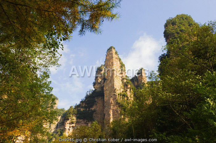 awl-images.com - China / China, Hunan Province, Zhangjiajie Forest Park, Wulingyuan Scenic Area, Unesco World heritage Site, limestone cliffs