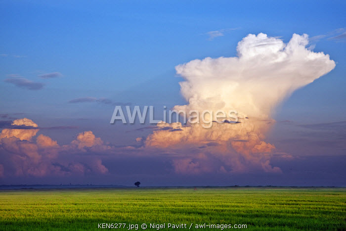 awl-images.com - Kenya / In the early morning, a huge cumulus nimbus cloud forms over Lake Victoria. Rice is grown extensively in the Yala Swamp in the foreground.