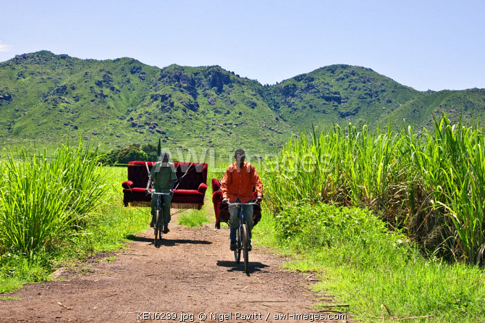 awl-images.com - Kenya / Kenya, Kisumu District. Two friends cycle home through sugar cane fields with a sofa set which they bought from a local furniture maker and upholsterer.
