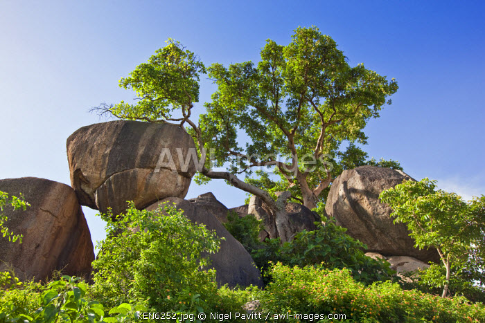 awl-images.com - Kenya / Kenya, Nyanza District. Rocks and fig trees adjacent to Kit Mikayi, an impressive rock cluster which is a culturally important site for the local Luo community.
