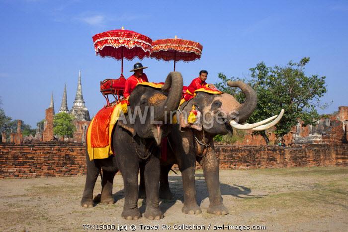 Thailand, Ayutthaya, Ayutthaya Historical Park, Elephants