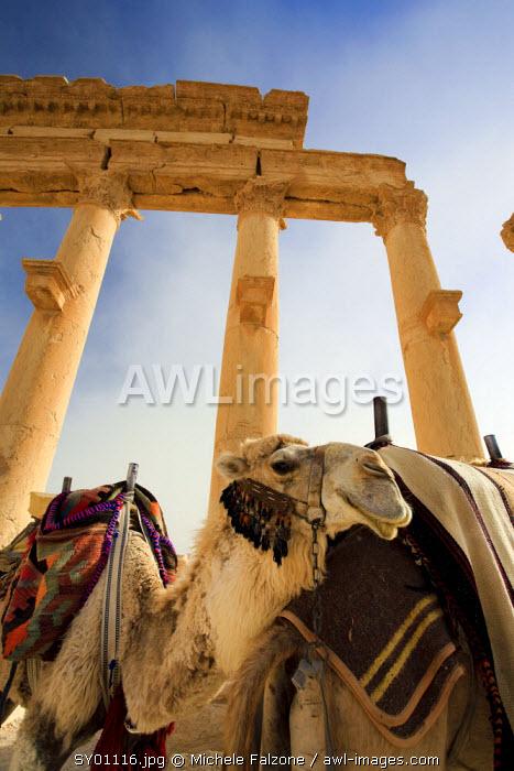 Syria, Palmyra ruins (UNESCO Site), Great Colonnade