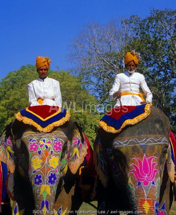 India, Rajasthan, Jaipur.  Mahouts on their elephants prior to an elephant polo match at the Jai Mahal Palace Hotel.