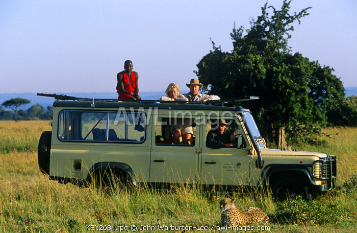 Kenya, Masai Mara National Reserve.  Watching a cheetah on a game drive in the Mara.