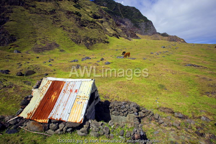 Tristan Da Cunha Island, settlement capital of Edinburgh. Basic shepherds shelter on the lower slopes of the rugged Queen Mary Volcano