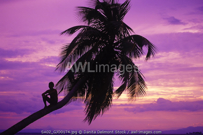 Young boy in palm tree at sunset, Ambergris Caye, Belize, Central America.