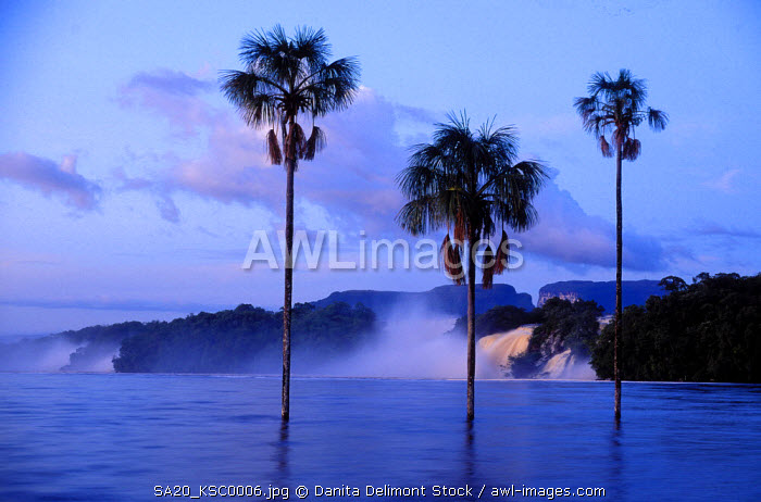 Venezuela, Canaima Lagoon, Canaima National Park, palm trees at dawn in the Carrao River.