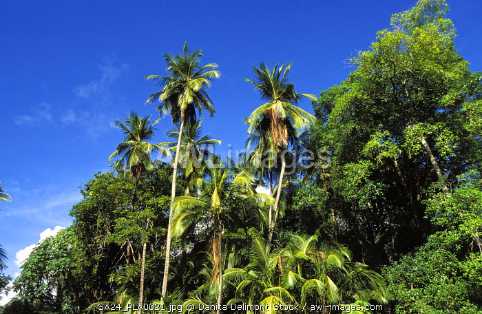 Tropical vegetation on the French penal colony on Devil's Island, French Guiana