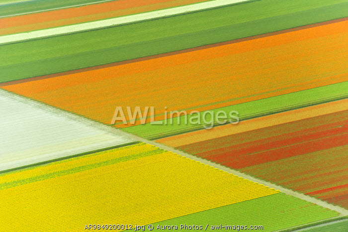 awl-images.com - The Netherlands / Looking down on tulips fields from an airplane, Holland, Netherlands.