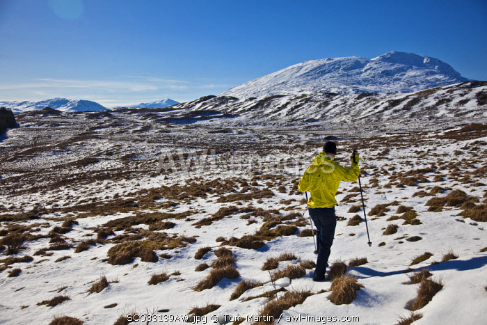 awl-images.com - Scotland / Glen Coe, Scotland. A walker crosses the moor with snow covered hills in the background. (MR)