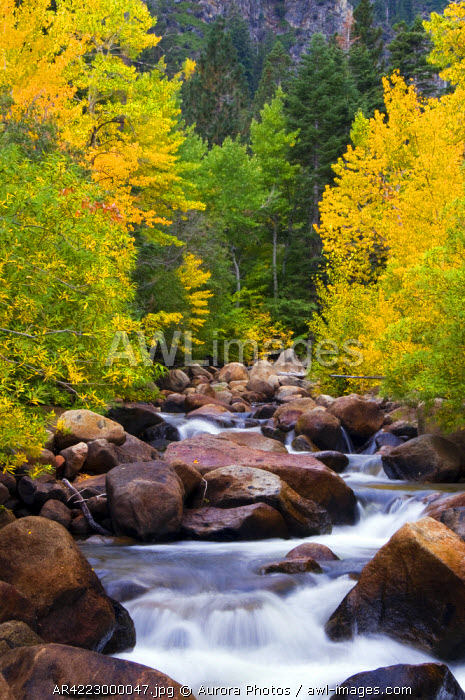 awl-images.com - USA / The west fork of the Carson River is alive with fall color outside of Markleeville, California, USA