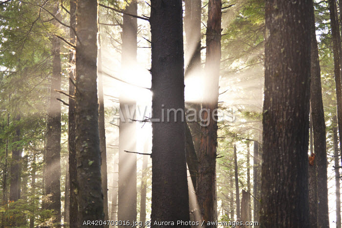 awl-images.com - USA / The sun bursts through the trees along the trail to Third Beach, Olympic National Forest, Washington State, USA