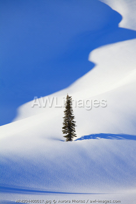 awl-images.com - USA / A tree stands alone, surrounded by a blanket of fresh snow, near Paradise, Mount Rainier National Park, Washington State, USA