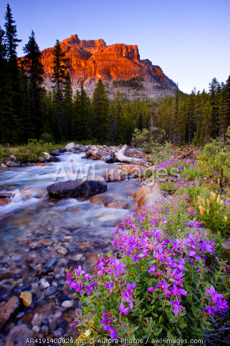 awl-images.com - Canada / Pink flowers, river, trees and mountain Banff National Park, Alberta, Canada