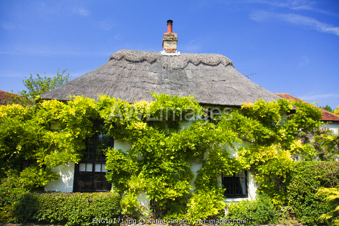 awl-images.com - England / England, Kent, Wickhambreaux. A wisteria-clad cottage in the pretty village of Wickhambreaux.