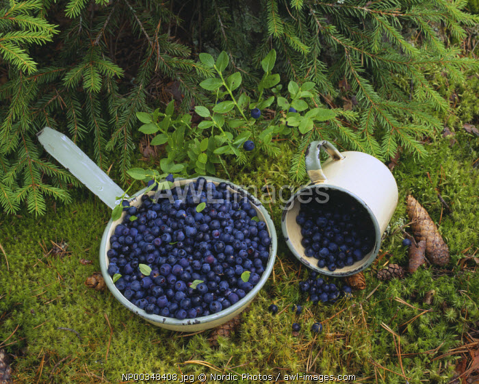 awl-images.com - Pile of blueberries