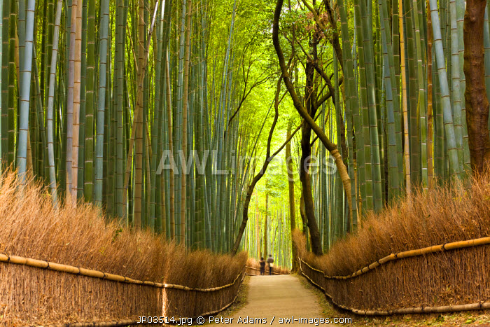 awl-images.com - Japan / Path through bamboo forest, Kyoto, Japan