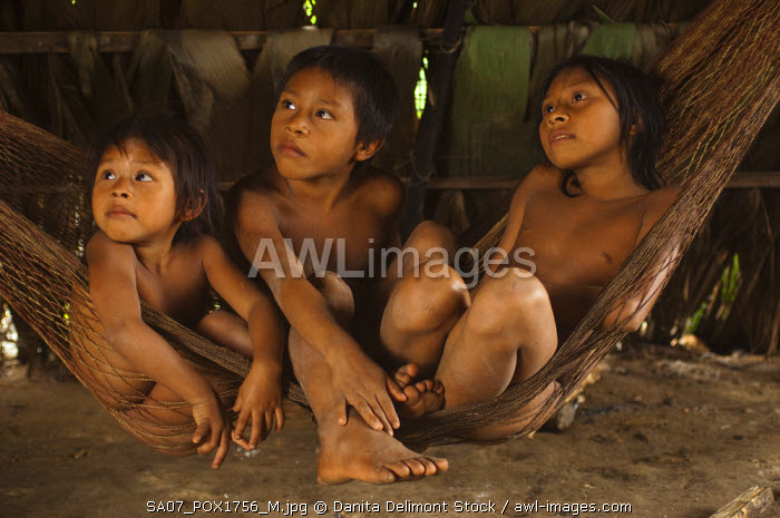Huaorani Indian Children In Hammock Gabaro Community Yasuni National Park Amazon Rainforest
