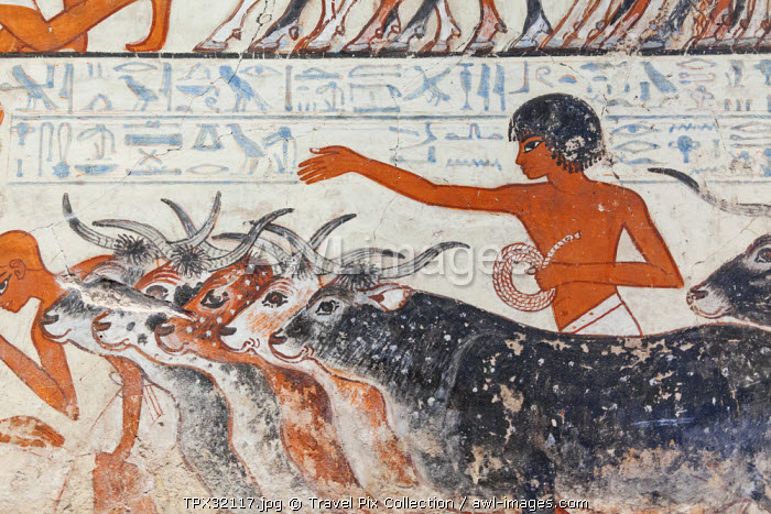 England, London, British Museum, Egyptian Room, Tomb Chapel of Nebamun, Painting of Young Boy Herding Cattle
