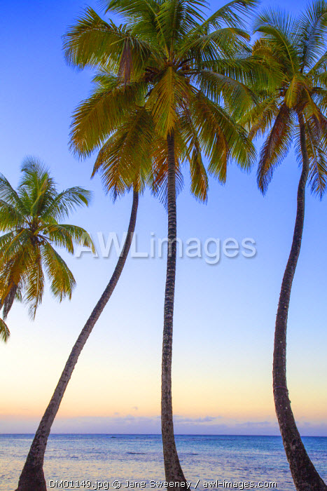 Dominican Republic, Samana Peninsula, Beach at Las Terrenas