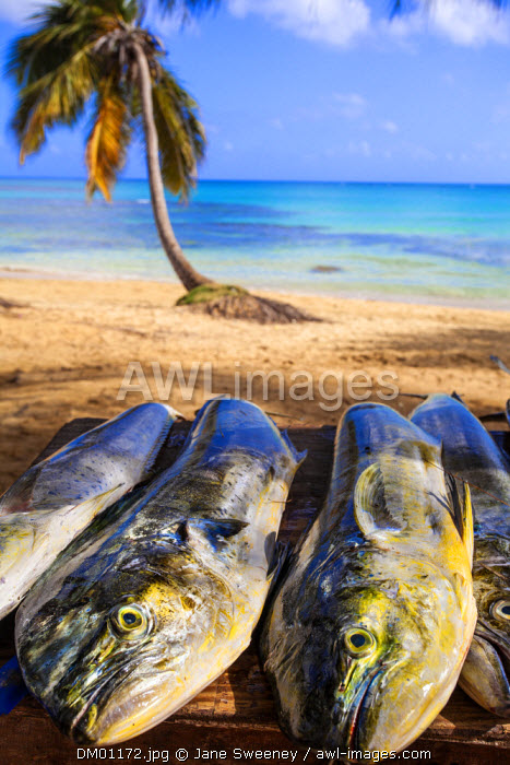 Dominican Republic, Samana Peninsula, Beach at Las Terrenas, Fresh Fish for sale on beach