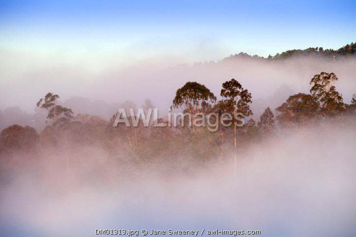 Dominican Republic, Jarabacoa, Misty dawn morning in the mountains of Jarabacoa