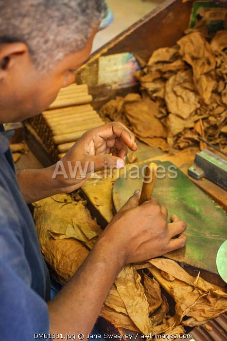 Dominican Republic, Santa Domingo, Colonial zone, Man making Cigars in Cigar shop