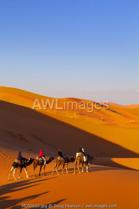 Tourists on camel safari, Sahara Desert, Merzouga, Morocco