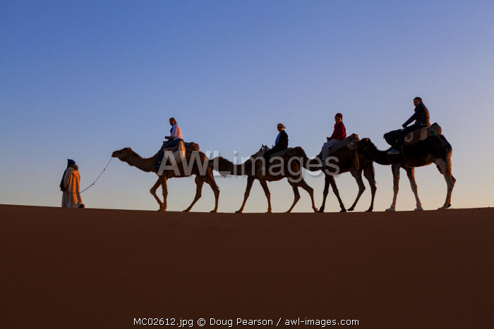 Tourists on camel safari, Sahara Desert, Merzouga, Morocco