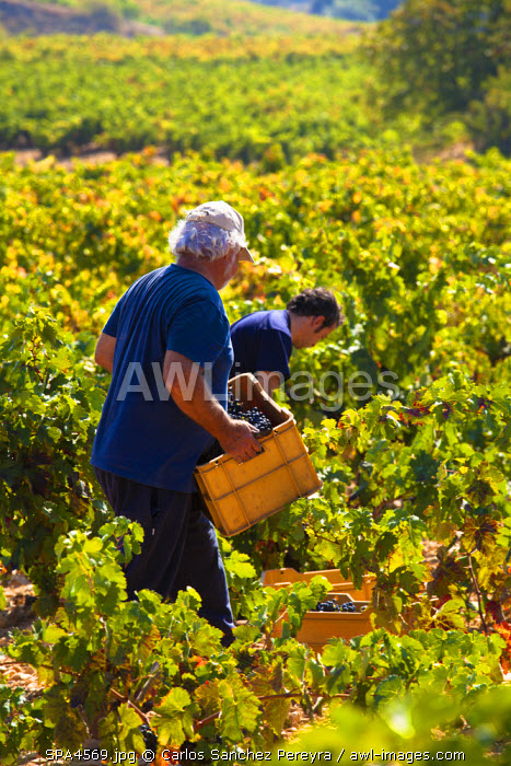 awl-images.com - Spain / Harvest season in Briones, La Rioja, Spain