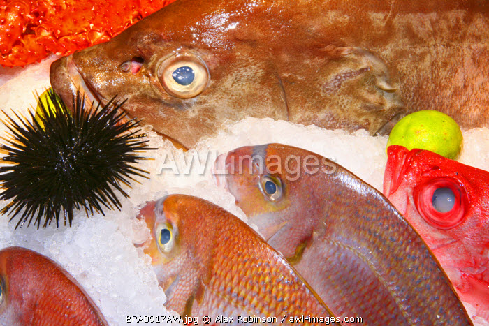 South America, Rio de Janeiro, Rio de Janeiro city, Assorted tropical fish and a sea urchin on ice in the Satyricon restaurant in Ipanema