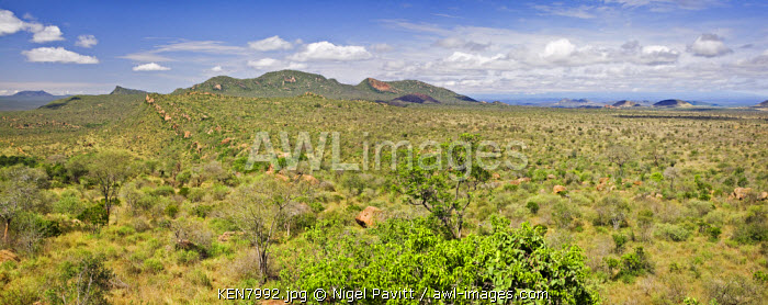 A typical landscape of Tsavo West National Park, Kenya