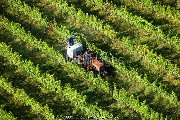 France, Loire, Marcilly le Chatel, vines AOC Cotes du Forez (aerial view)
