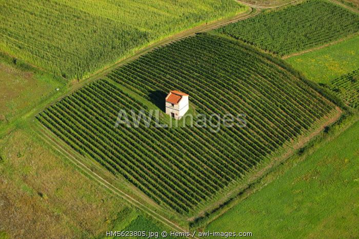France, Loire, Champdieu, vines AOC Cotes du Forez (aerial view)