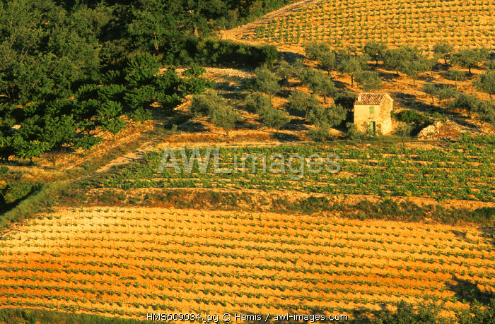 France, Drome, Vinsobres, Shed in the vineyards