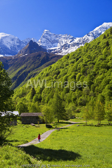 France, Savoie, Champagny le Haut, hamlet of Laisonnay d'en Haut with a view of the Grande Casse (3855m), Parc National de la Vanoise (Vanoise National Park)