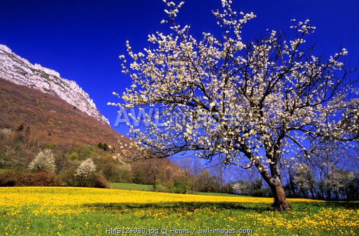 France, Isere, spring in the natural regional park of Chartreuse