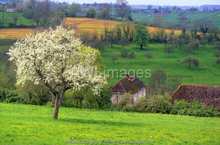 France, Calvados, Pays d'Auge in the surroundings of Lisieux in Normandy
