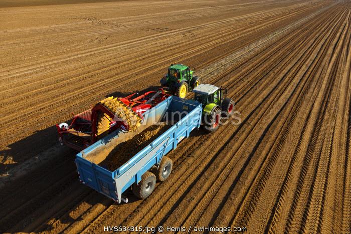 France, Eure, Villers, harvesting potatoes (aerial view)