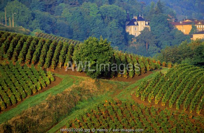 France, Rhone, Beaujolais Region, Vieille Morte Pass