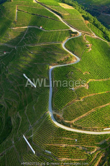 France, Rhone, Ampuis, Cote Rotie AOC vineyards (aerial view)