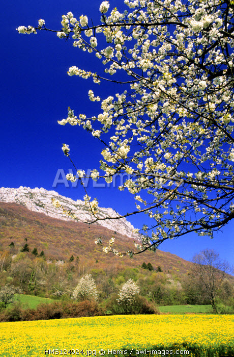 France, Isere, natural regional park of Chartreuse, Spring