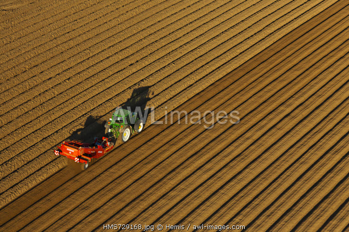 France, Eure, Vesly, culture of potato (aerial view)