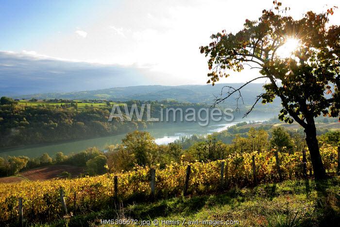France, Ain, Seyssel, vineyard and Rhone River