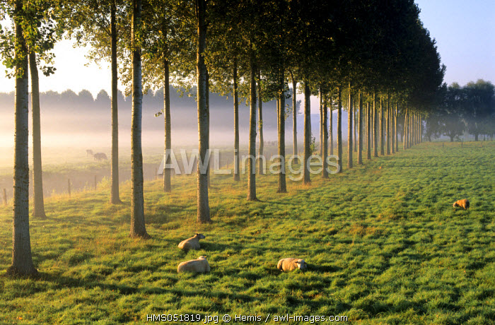 France, Calvados, Troarn, marshes of the Dives River