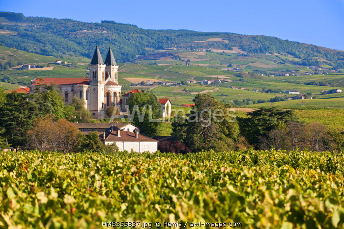 France, Rhone, Le Beaujolais, Regnie Durette and its church with two belltowers, in the middle of the vineyard of Regnie, the youngest one out of the 10 vintages of the Beaujolais