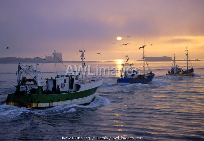 France, Manche, Cotentin, Ile de Tatihou, Saint Vaast harbour, fishing boats